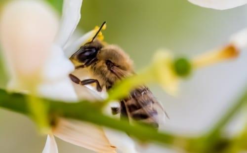 夢 占い 蜂 に 刺され た 《夢占い》夢の中に蜂が出てきた時のメッセージを解読!-ミラクル