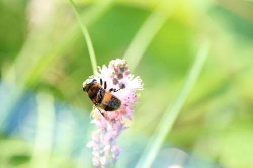 刺され た に 占い 蜂 夢